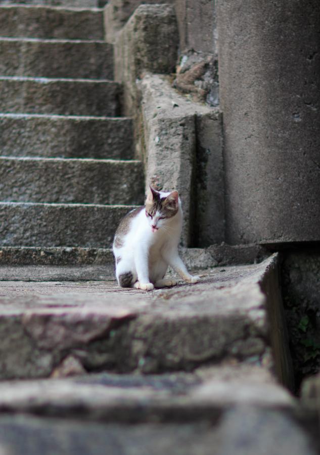 Free!聖地巡礼 田後の町並み 第1話ぼうとうにでてきたのとそっくりの白い猫がアニメと同じ場所に現れる