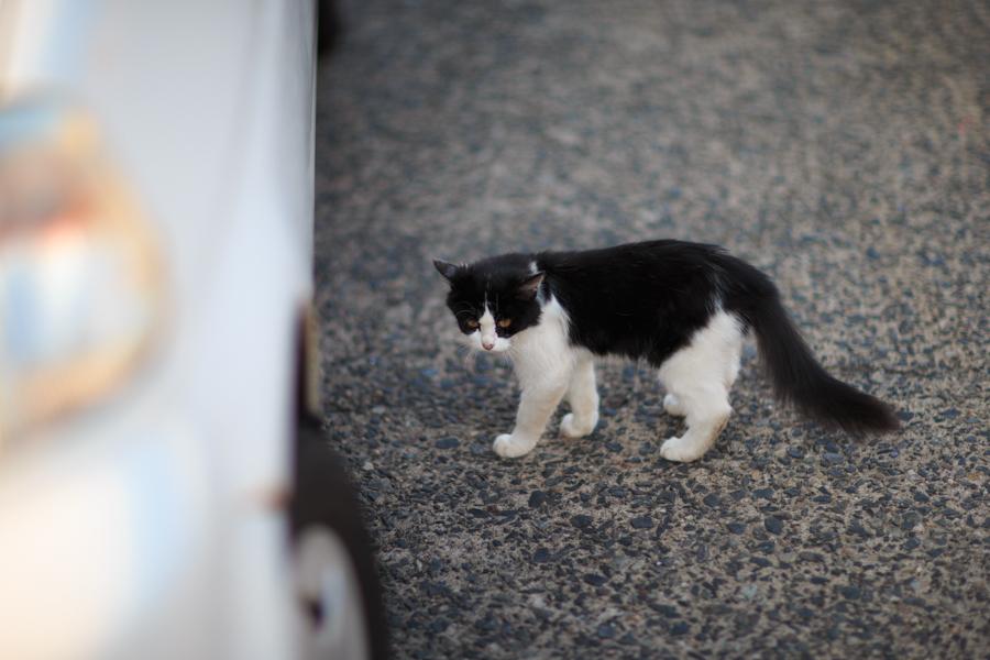 Free!聖地巡礼 岩美町の漁港にいた猫