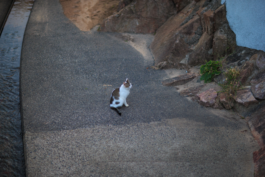Free!聖地巡礼 猫